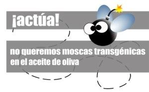 cabecera_moscas
