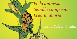 Laura Calvet, Lleida